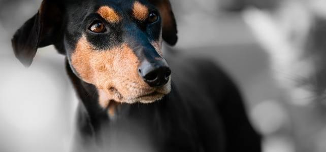 Нагръдници за кучета